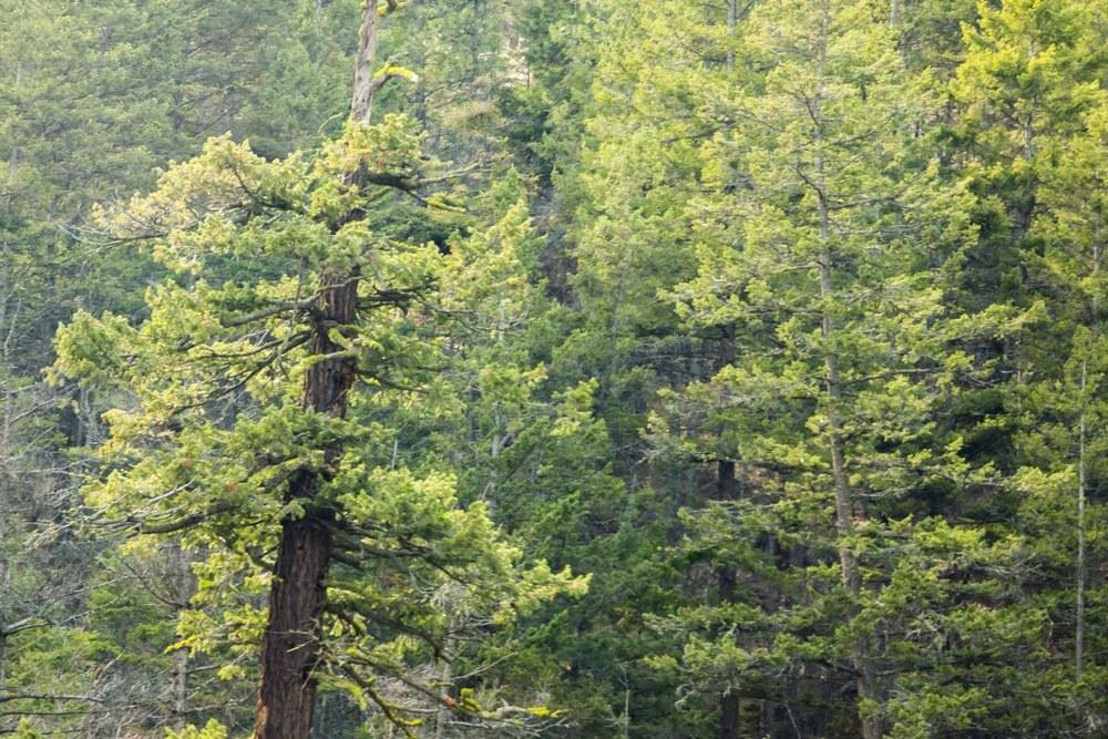 Parque Provincial Fintry
